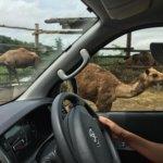 群馬への車旅!キャンカーで行くサファリパーク&世界遺産訪問!